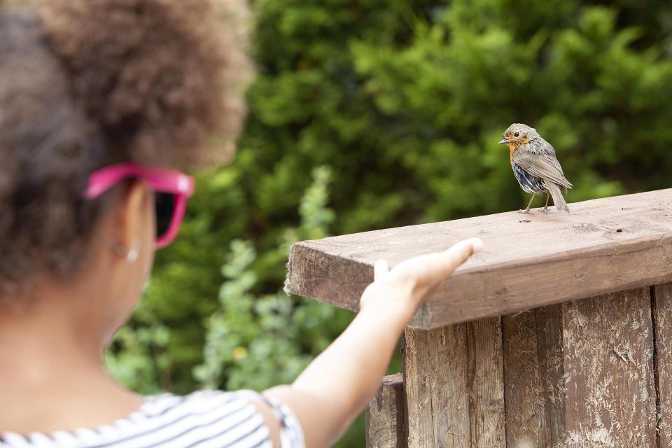 A small child reaches out to a small bird